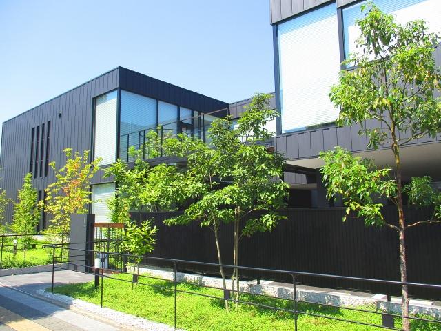 玄関アプローチと植木