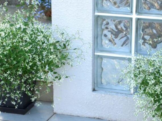 玄関先の植木